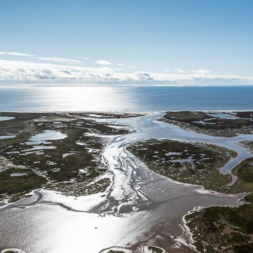 Арктическая тундра